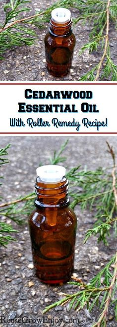 Have you ever used Cedarwood Essential Oil? I am going to share with some of the top uses for it as well as a roller remedy recipe.