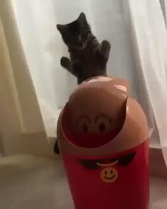 Source by videos wallpaper cat cat memes cat videos cat memes cat quotes cats cats pictures cats videos Funny Cute Cats, Cute Cats And Kittens, Cute Funny Animals, I Love Cats, Crazy Cats, Kittens Cutest, Funny Kittens, Funny Animal Memes, Funny Cat Videos