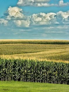 Country Living ~ corn fields of gold Country Farm, Country Life, Country Roads, Country Living, Tableaux D'inspiration, Fields Of Gold, Field Of Dreams, Country Scenes, Felder