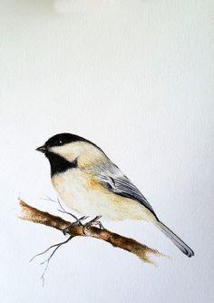 Original Drawing, Colored Pencil Bird, Chickadee Illustration 5.5x8 inch