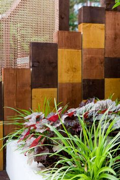 The planting scheme will follow a black and white theme, including sambucas, phormiums and heuchera, with the occasional orange flora as an accent. #heuchera #railwaysleeper #urbangarden #chaincurtain