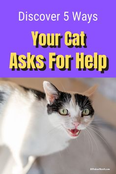 Discover 5 ways your cat asks for help. All cats are unique and yours will have her own way of getting your attention! Find out more.. #catbehaviorexplained #howcatscommunicate