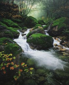 """Dance of Autumn"" by Adair Payne"