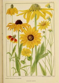 Flowers of mountain and plain / - Biodiversity Heritage Library