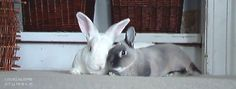 ♥ love, bunnies, bunny, rabbit, animals, nature