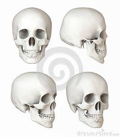 Skull Reference, Drawing Reference Poses, Drawing Tips, Skull Head, Skull Art, Skull Illustration, Human Skull, Anatomy Drawing, Art Drawings Sketches