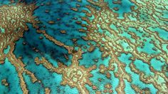 Credit: /Yann Arthus Bertrand The Great Barrier Reef, Queensland, Australia (16°55' S – 146°03' E). The film Home is a journey across planet Earth filmed in 54 countries in over 120 locations which took 217 days of shooting over 18 months to complete. On 5 June, it will be available free to view on YouTube, at screenings around the world and on DVD