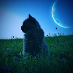 """""""The cat has always been associated with the moon.  Like the moon, it comes to life at night, escaping from humanity and wandering over housetops with its eyes beaming out through the darkness."""" --Patricia Dale-Green"""