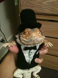 Ahh I want to dress up my beardie!  Im sure he'd hate it.