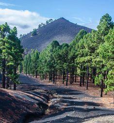 Reisebericht La Palma Ruta de los Volcanes