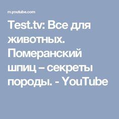 Test.tv: Все для животных. Померанский шпиц – секреты породы. - YouTube