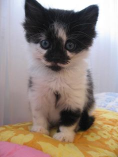 omg the most adorable cat in the world!