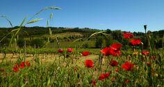 Collines toscanes, randonnée en #Toscane