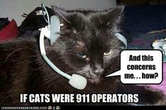 And this concerns me how? If cats were 911 Operators, lol