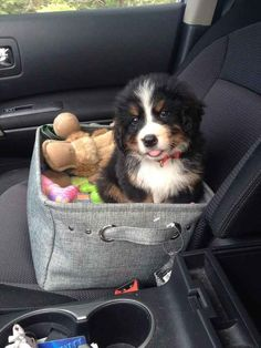 Happiness exists because this Bernie in a basket exists. My heart is melting into a puddle!