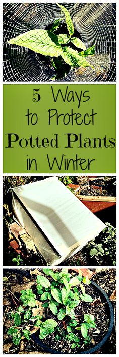 Plants in pots need a little extra care to keep them protected from the cold of winter. Here are 5 easy ways to do it!