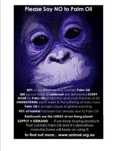 Please look into the products you buy. The palm oil industry is DESTROYING our planet - wiping out rain forests and wild life habitats. Our Planet, Save The Planet, Planet Earth, Primates, Save The Orangutans, Save Our Earth, Stop Animal Cruelty, Animal Welfare, Animal Rights