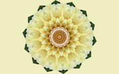 Peony Mandala - wide screen, kaleidoscope, beautiful, artwork, abstract, painting, art, mandala