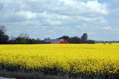 Was wir bisher kennen: Frühling in Südschweden http://www.travelworldonline.de/traveller/die-oeresundbruecke-sehnsuchtsort-auf-dem-weg-nach-kopenhagen/?utm_content=buffer4a101&utm_medium=social&utm_source=pinterest.com&utm_campaign=buffer ... #twosweden #sweden #schweden #scandinavia