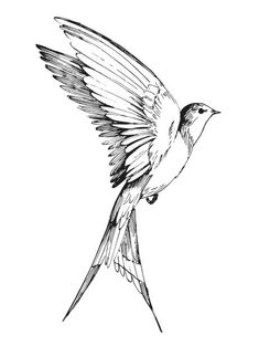 Flying Bird Drawing, Fly Drawing, Eagle Drawing, Bird Drawings, Tiny Bird Tattoos, Black Bird Tattoo, Blue Tattoo, Small Tattoos, Tattoo Sketches