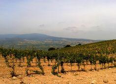 Nuestros viñedos son de tempranillo blanco y viura.