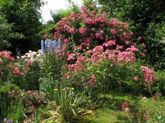 Beautiful Roses Garden Roses Beautiful Garden Flowers