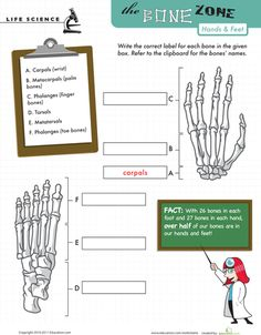 muscular system free here is a free muscular system worksheet or quiz and answer key to go. Black Bedroom Furniture Sets. Home Design Ideas