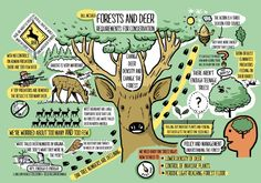 forest and Deer conference