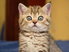 252 Best Kitty Funnies Images Funny Cats Pretty Cats Cats