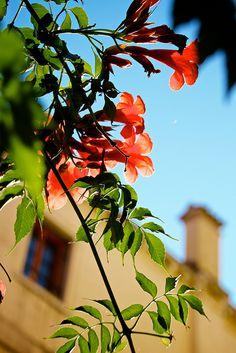 Flower in the sunshine