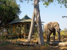 LITTLE VUMBURA CAMP Okavango, Botswana