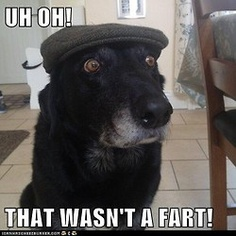 75 Best Dog Farts Images Fanny Pics Funny Stuff Funny Animals