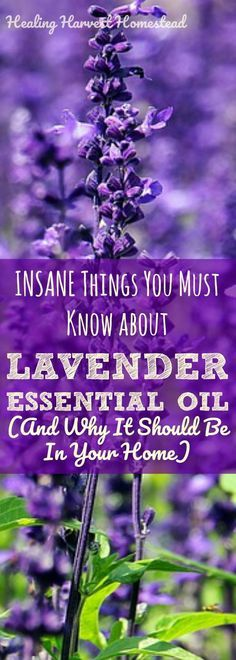 Pinterest Lavender Essential Oil.jpg