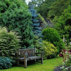 Garden With Evergreen Trees And Wooden Bench