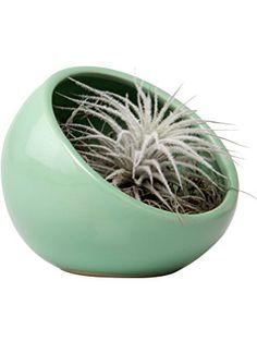 Chive - Half Moon, Ceramic Terrarium Globe, in Green ❤ Chive