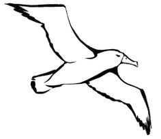 albatross drawing - Google Search