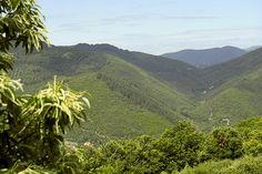 Unesco Causses Cévennes http://education.francetv.fr/videos/les-cevennes-la-grotte-des-demoiselles-v110100