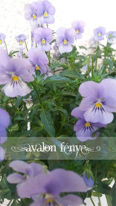 lilac flowers https://www.facebook.com/AvalonFenye/