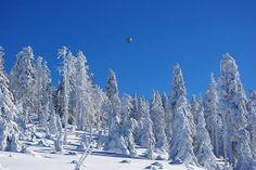 Die Hochebene bei Clausthal-Zellerfeld wird hin und wieder auch zum Snowkiten genutzt...muss ein tolles Feeling sein....Im Hintergrund der Brocken von dunklen Schneewolken umgeben. Hoffe die Sonne kommt bald wieder raus.