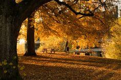 October, 15 Zurich, Switzerland October 15, Zurich, Switzerland, Country Roads, Fall, Plants, Autumn, Flora, Plant