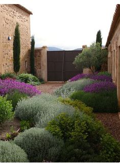 Have to go with xeriscaping and low water in the cottage garden. Like these plants in the Jardin Toledo Gravel garden, xeriscaping, dry garden, mediterranean garden. Dry Garden, Gravel Garden, Gravel Patio, Side Garden, Pea Gravel, Garden Water, Garden Pond, The Secret Garden, Garden Cottage
