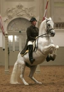 Lipizzaner Horses - the story of their rescue in WWII  - god bless the men involved