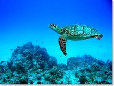 Cozumel, so hope to see a turtle floating by me