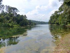 rainforest at MacRitchie Reservoir Singapore