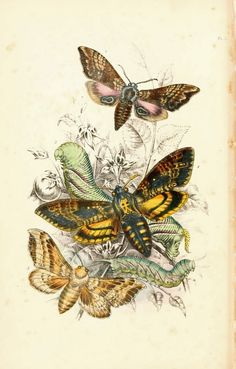 Vintage Ephemera: insects and butterflies