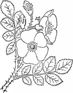 Wild Rose Sketch Image! - The Graphics Fairy