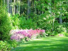 Grüner Garten mit Halbschatten und rosa Prachtspieren