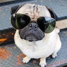 Sonnenbrillen / Sunglases