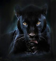 BLACK PANTHER                                                                                                                                                                                 More