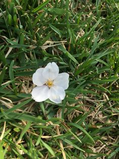 Doup a dolidip daisy